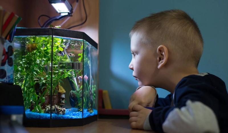 По каким причинам лучше всего для ребенка покупать рыбок?